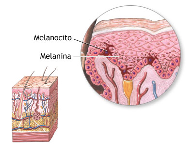 melanina_2